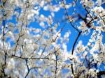 printemps 2.jpg